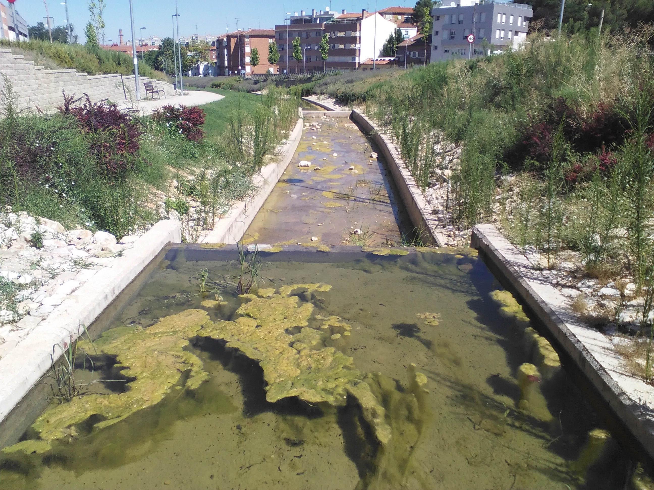 Canal El Fuerte (3)