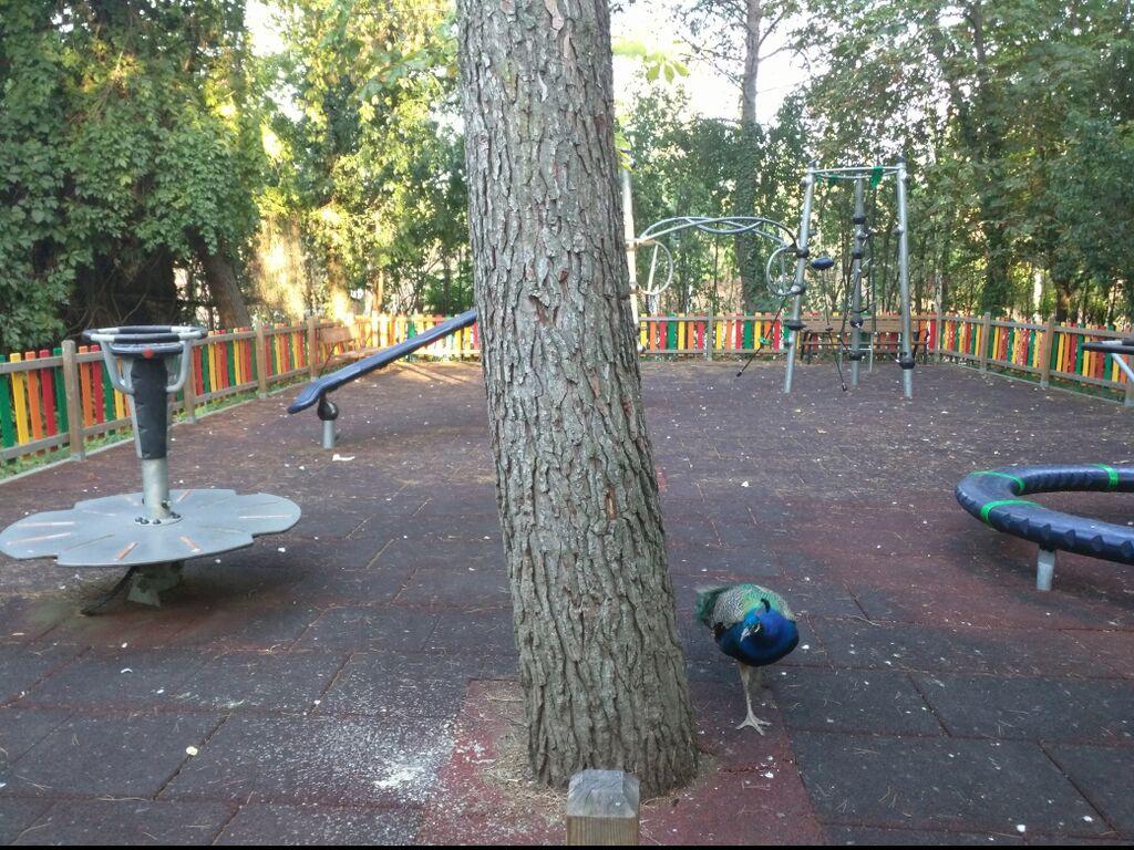 Zona infantil con excrementos y otros residuos