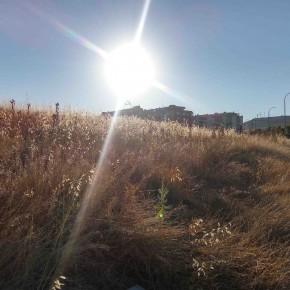 Tras un nuevo incendio, Ciudadanos (C's) insiste en la limpieza de solares